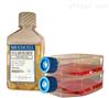 PC-12 大鼠肾上腺嗜铬细胞瘤细胞(高分化)