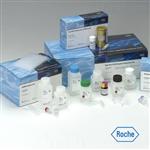 大鼠Ⅳ型前胶原肽(PⅣNP)elisa检测试剂盒