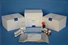 犬氨基端前脑钠素(NT-ProBNP)ELISA试剂盒
