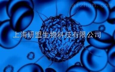 小鼠肾腺癌细胞,rag细胞