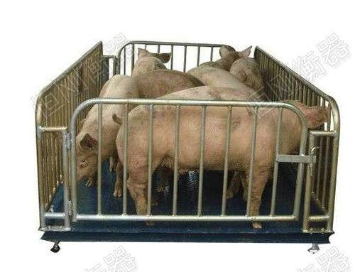 猪场专用地磅