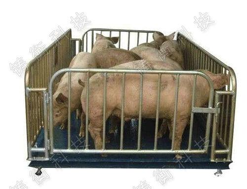 牲畜专用地磅