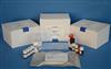 96T/48T人白介素2(IL-2)ELISA试剂盒